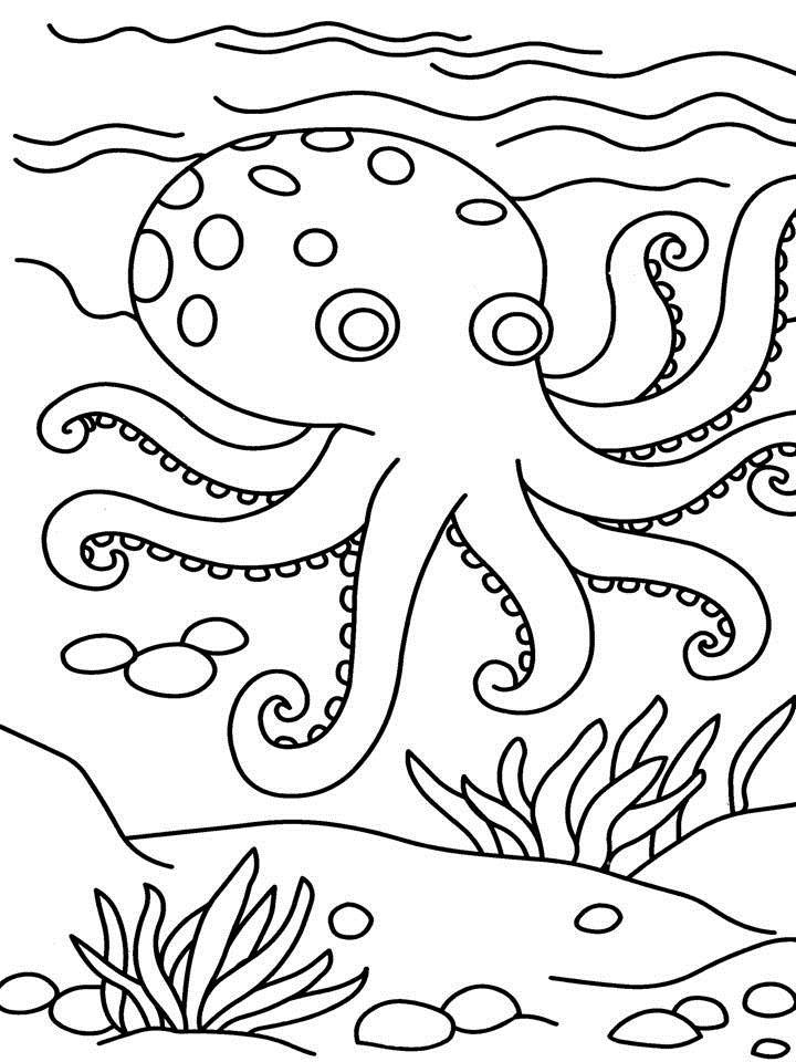 octopus color page octopus coloring pages preschool and kindergarten color page octopus