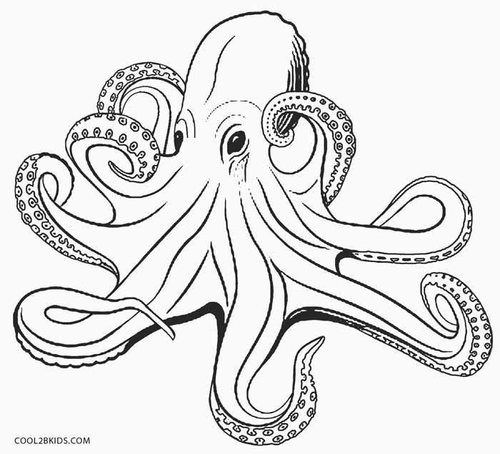 octopus color page printable octopus coloring page for kids cool2bkids color page octopus