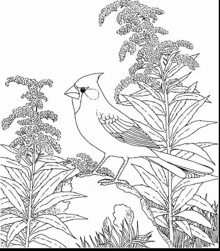 ohio state tree coloring page ohio buckeye coloring page coloring pages ohio page coloring tree state