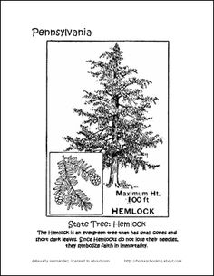 ohio state tree coloring page ohio state bird and flower flickr photo sharing page coloring tree ohio state