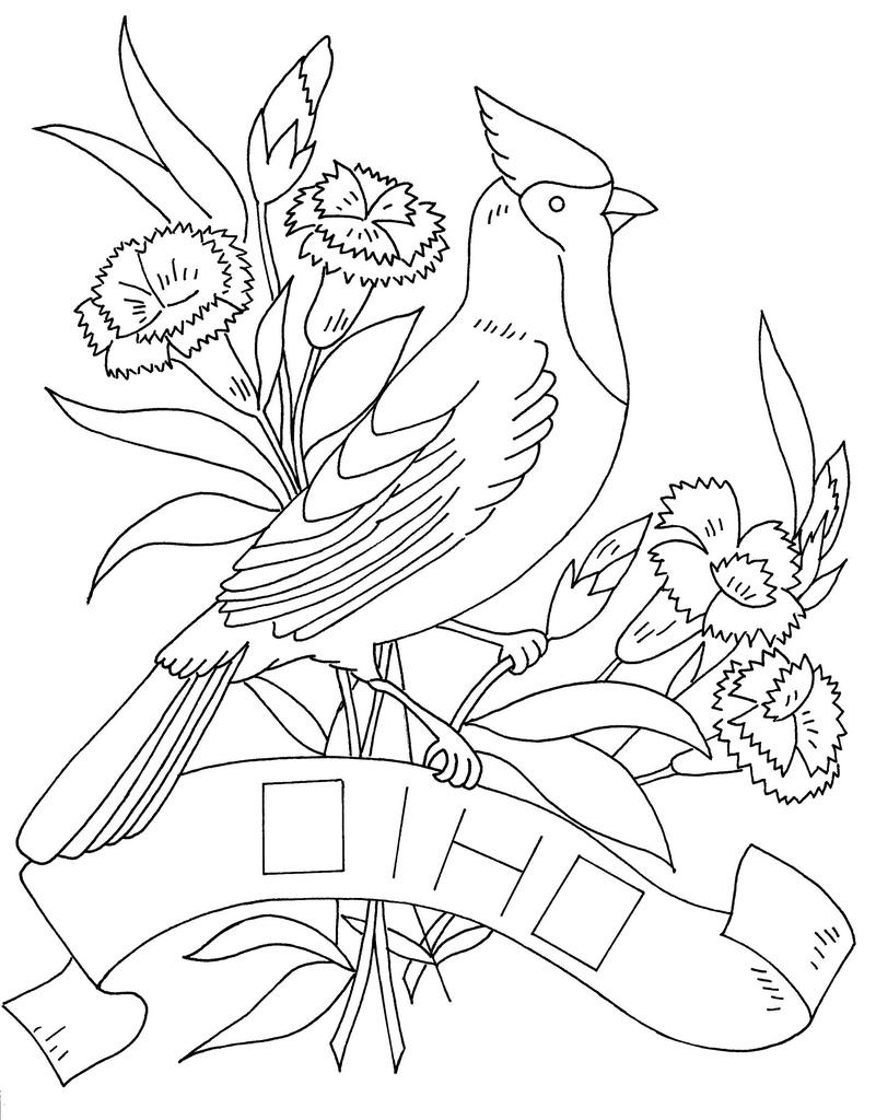 ohio state tree coloring page ohio state buckeye leaf template sketch coloring page page state ohio tree coloring