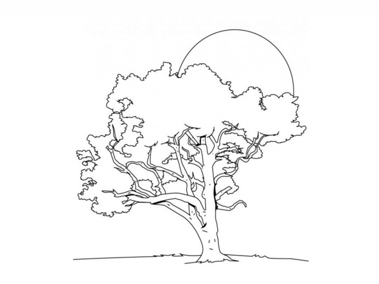 ohio state tree coloring page ohio state buckeyes coloring pages coloring home state ohio coloring tree page