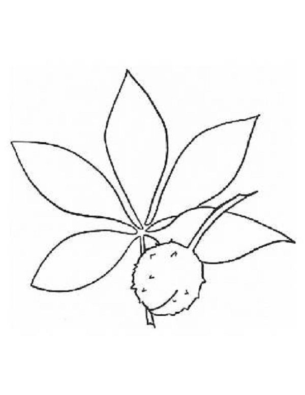 ohio state tree coloring page ohio state buckeyes coloring pages for kids coloring page tree ohio coloring state