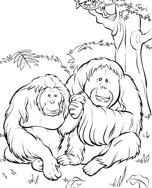 orangutan coloring pages baby orangutan coloring page supercoloringcom pages coloring orangutan