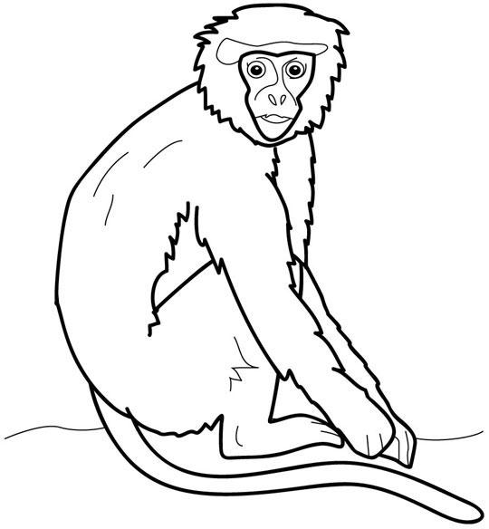 orangutan coloring pages cartoon orangutan clipartsco pages coloring orangutan