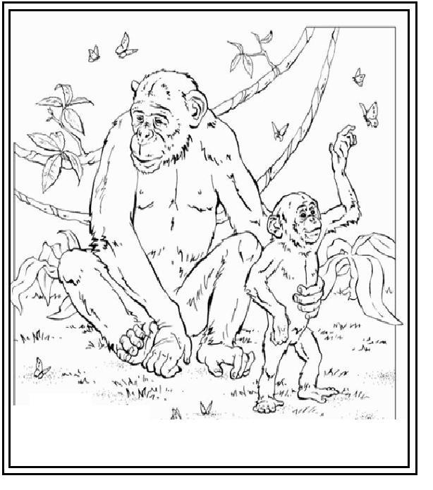 orangutan coloring pages orangutan coloring page crayolacom orangutan pages coloring