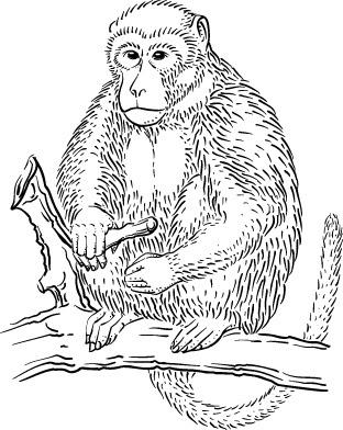 orangutan coloring pages orangutan coloring page educationcom coloring pages orangutan