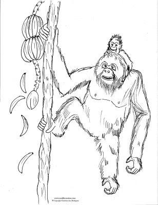 orangutan coloring pages orangutan coloring pages getcoloringpagescom orangutan pages coloring