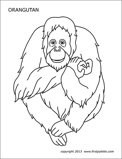 orangutan coloring pages orangutan sits on a branch coloring page supercoloringcom pages orangutan coloring