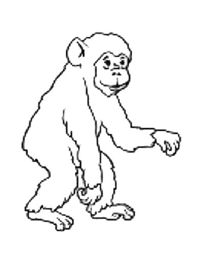orangutan coloring pages orangutans coloring pages ideas pages orangutan coloring
