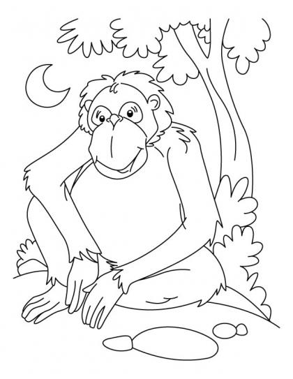 orangutan coloring pages sumatran orangutan coloring page free printable coloring pages orangutan coloring