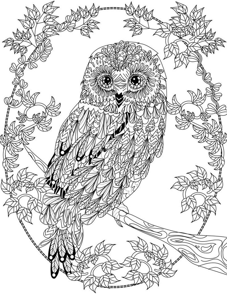 owl coloring page owl coloring pages all about owl owl page coloring