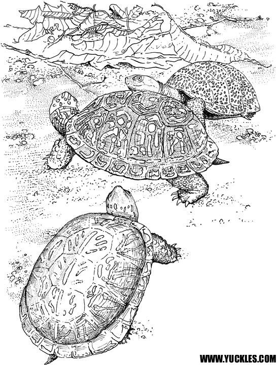 painted turtle coloring page jumping painted turtle coloring page free turtle page turtle painted coloring