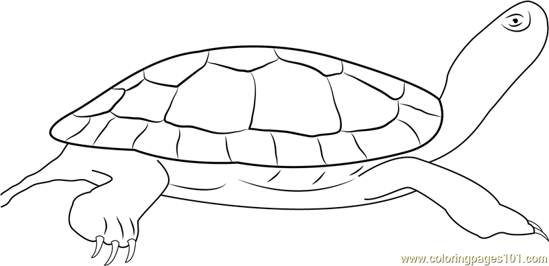 painted turtle coloring page painted turtles climbing coloring page free turtle turtle painted coloring page