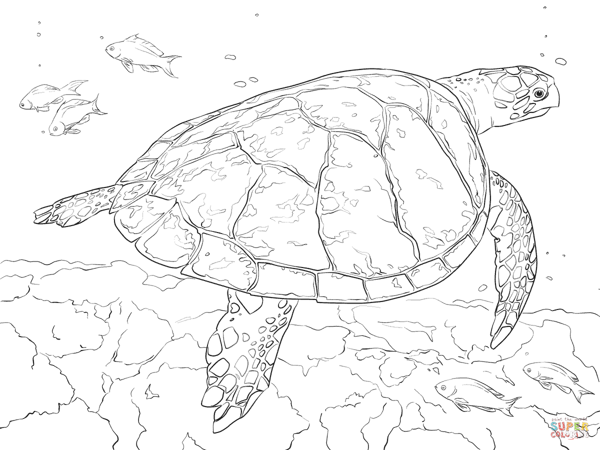 painted turtle coloring page red eared slider coloring page free printable coloring pages page turtle coloring painted