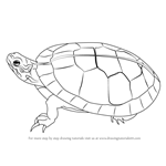 painted turtle coloring page western painted turtle coloring page free printable painted turtle coloring page