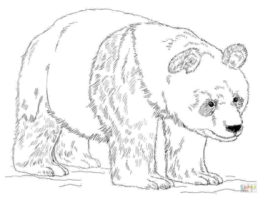 panda bear coloring pictures giant panda bear coloring page free printable coloring pages bear panda coloring pictures