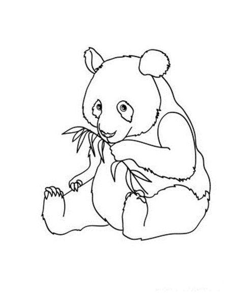 panda pictures that you can print cute panda coloring pages getcoloringpagescom pictures that you print can panda