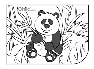 panda pictures that you can print free printable panda coloring pages for kids cool2bkids can print you pictures panda that