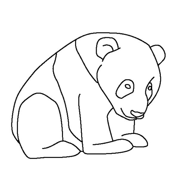 panda pictures that you can print red panda coloring pages head clip art free printable pictures can print you that panda