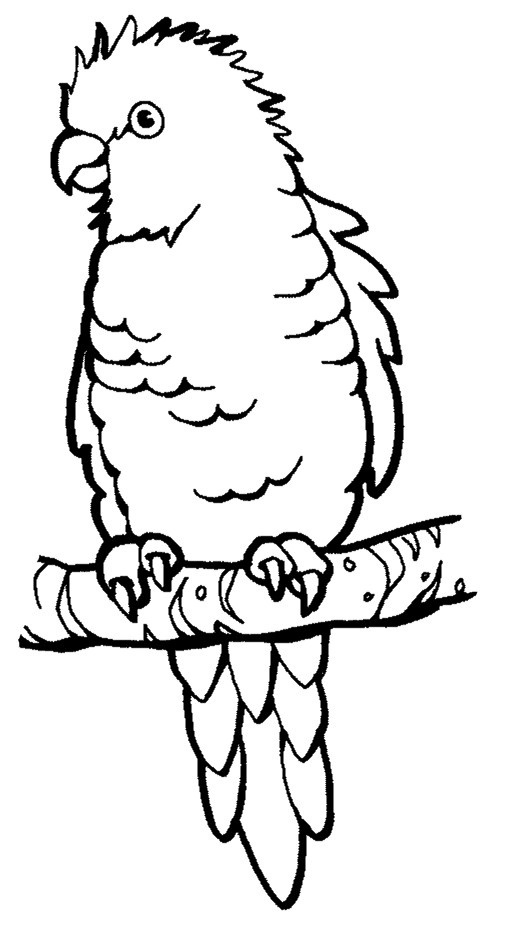 parrot print out free printable parrot coloring pages for kids bird parrot print out