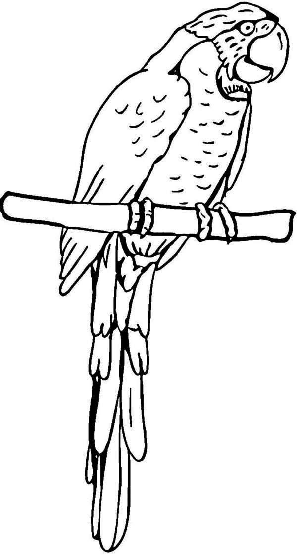 parrot print out pin by muse printables on printable patterns at print parrot out 1 1