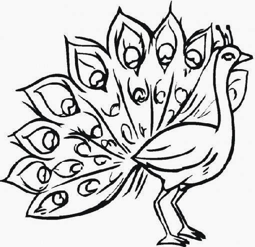 peacock coloring book peacock coloring pages peacock book coloring