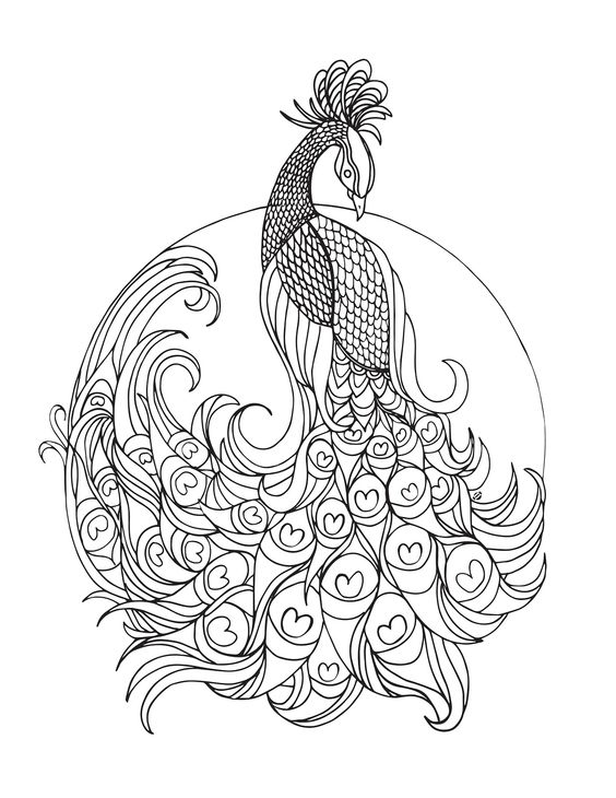 peacock coloring free printable peacock coloring pages for kids coloring peacock