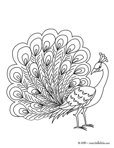 peacock coloring free printable peacock coloring pages for kids coloring peacock 1 1