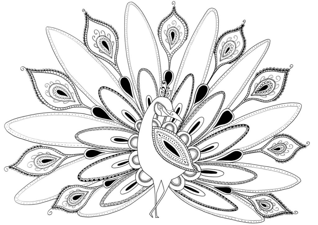 peacock coloring printable peacock coloring pages for kids cool2bkids coloring peacock 1 1