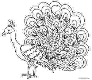 peacock images for coloring free printable peacock coloring pages for kids peacock images for peacock coloring