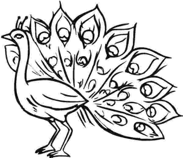 peacock images for coloring peacock drawing color at getdrawingscom free for coloring for peacock images