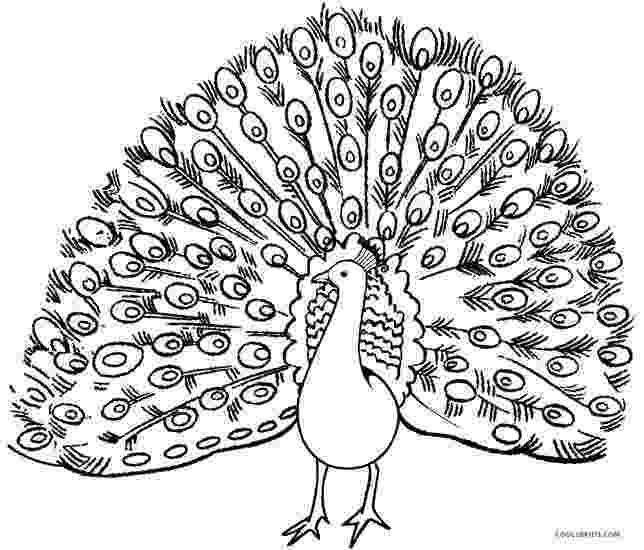 peacock images for coloring printable peacock coloring pages for kids cool2bkids for peacock images coloring