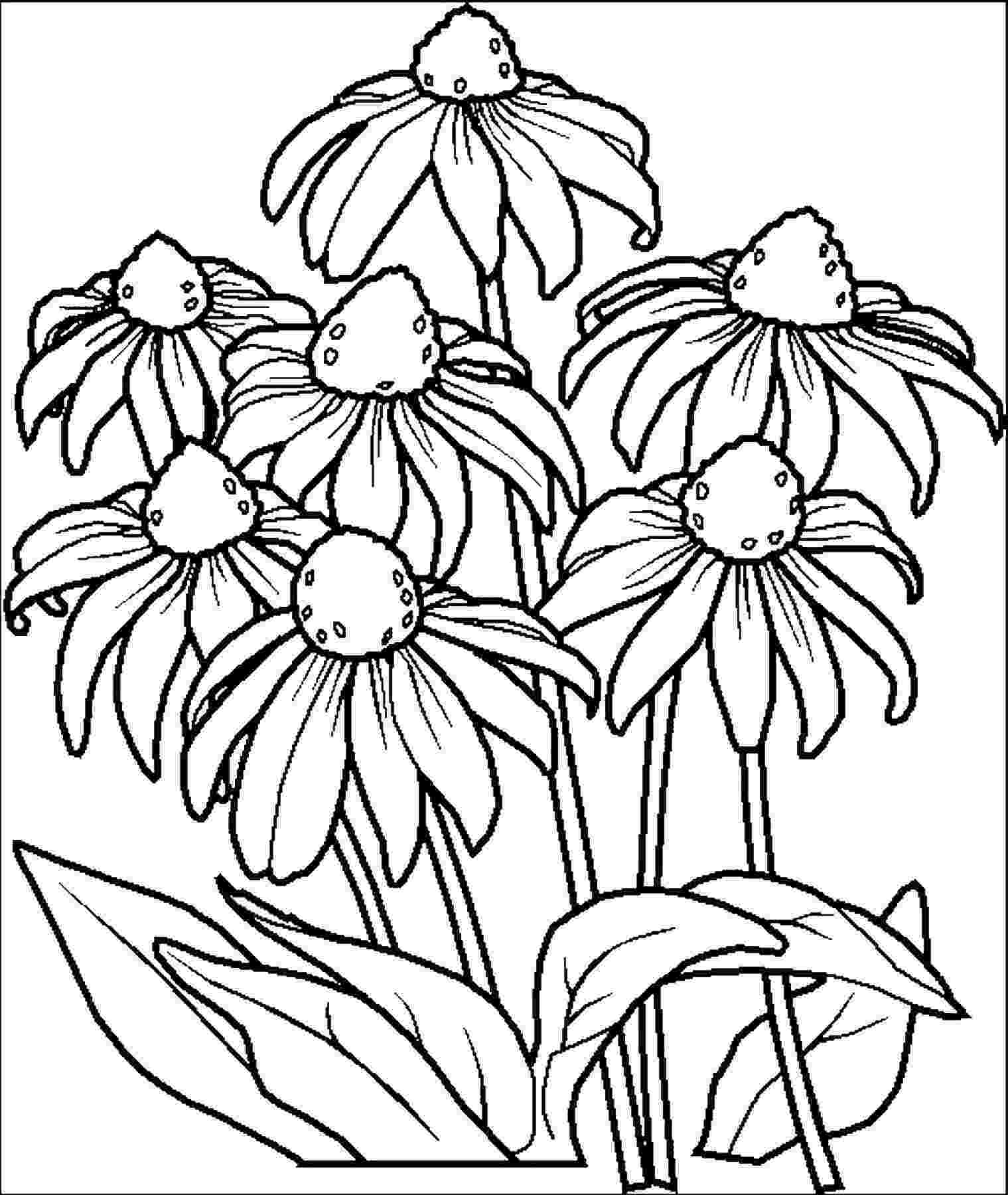 pics of flowers to color free printable flower coloring pages for kids cool2bkids pics of flowers to color