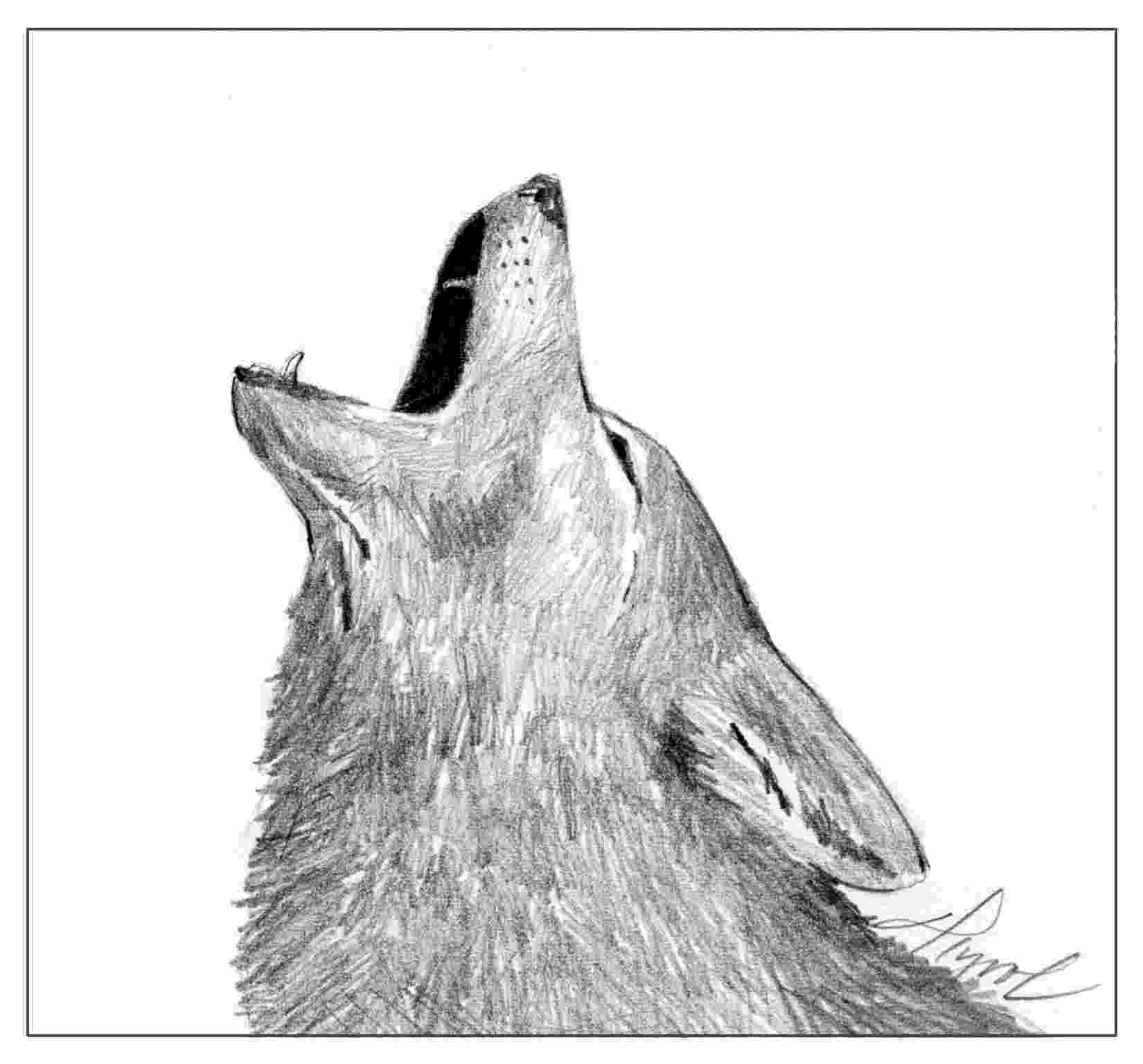 picture of coyote howling at the moon coyotes decoding their yips barks and howls the coyote the of picture moon at howling