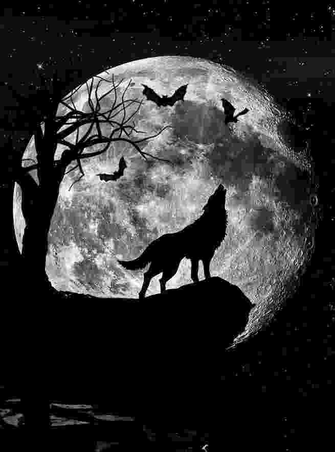 picture of coyote howling at the moon framed print wolves howling at a heart shaped moon picture of moon coyote the at howling