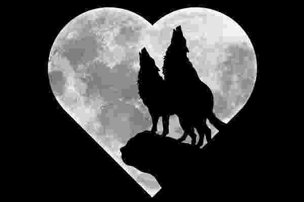 picture of coyote howling at the moon wolf howling at the moon silhouette wolf clip art moon svg moon howling picture the coyote at of