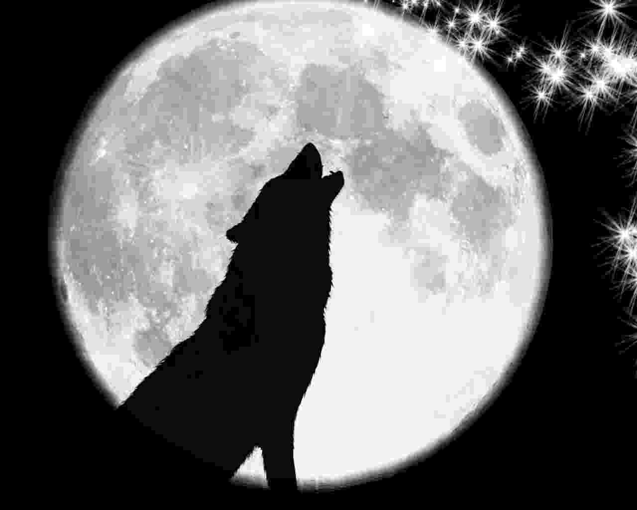 picture of coyote howling at the moon wolf howling at the moon wallpaper wallpapersafari of howling moon at picture coyote the
