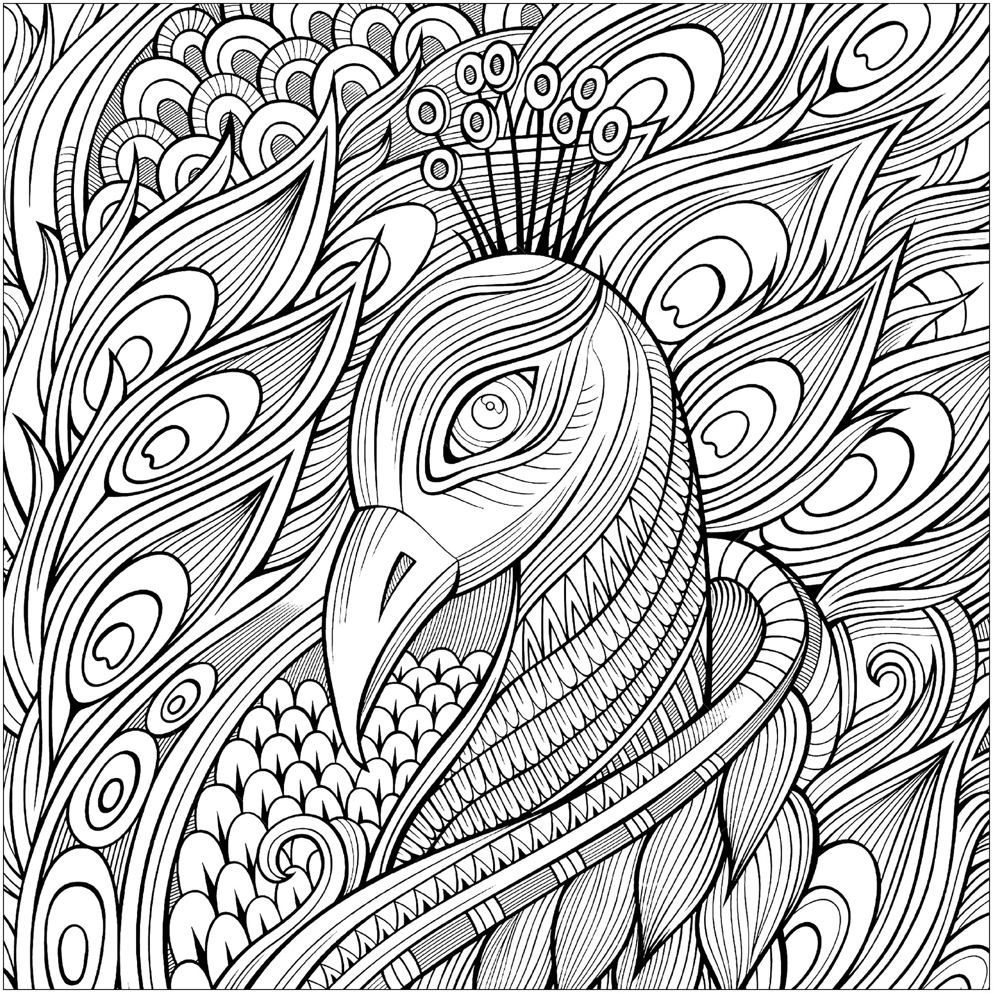 picture of peacock for colouring elegant peacock and its blue feathers peacocks adult picture colouring for peacock of