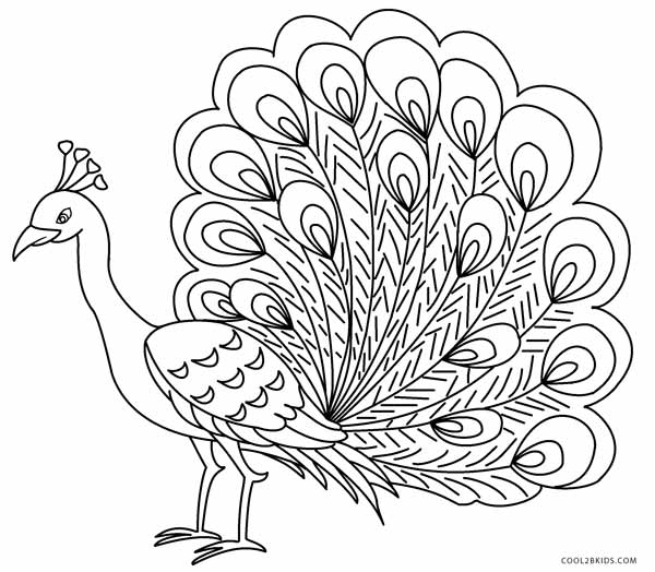 picture of peacock for colouring pretty peacock coloring page peacock coloring pages picture for colouring of peacock