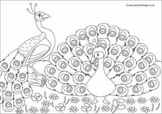 picture of peacock for colouring printable bird colouring pages for kids picture of for colouring peacock