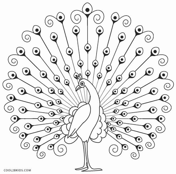 picture of peacock for colouring printable peacock coloring pages for kids cool2bkids for colouring of picture peacock