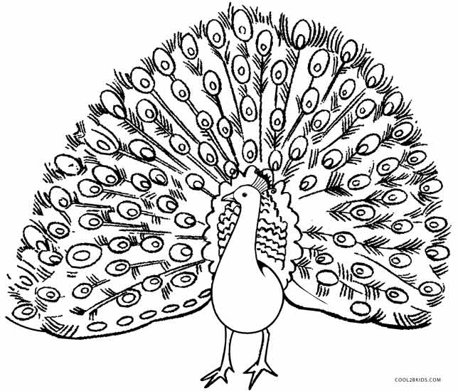 picture of peacock for colouring printable peacock coloring pages for kids cool2bkids picture colouring for peacock of