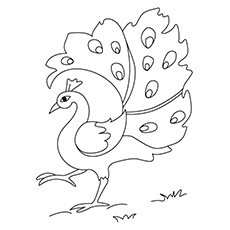 picture of peacock for colouring top 20 free printable bird coloring pages online picture of peacock colouring for