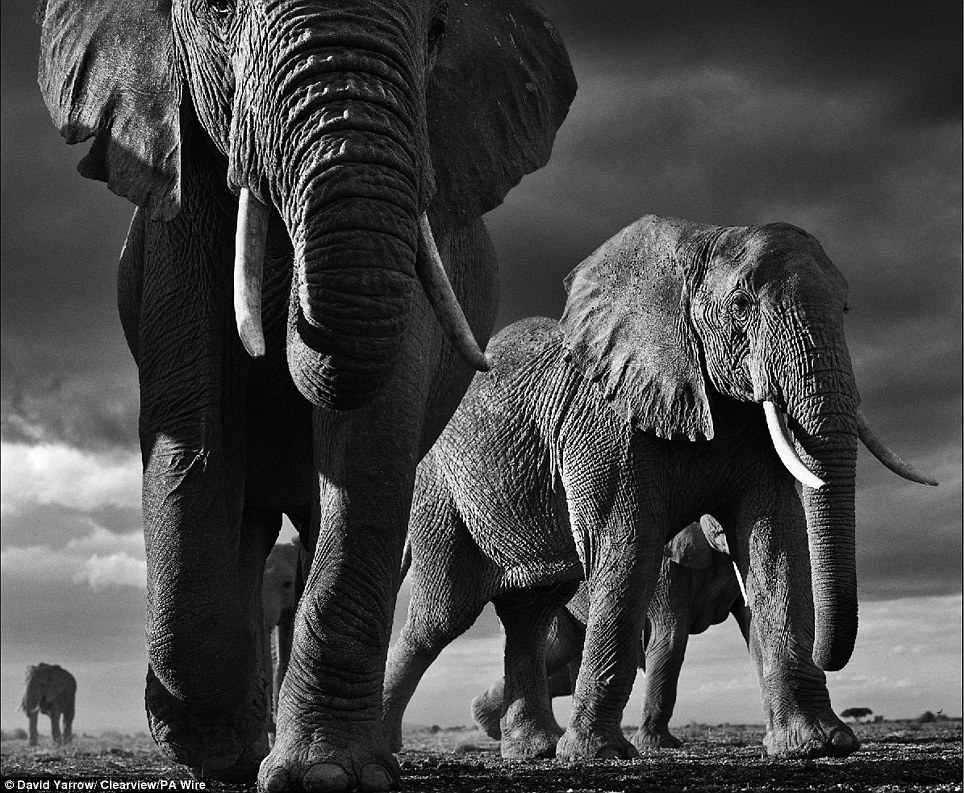 picture of safari animals best black and white animals illustrations royalty free safari picture animals of
