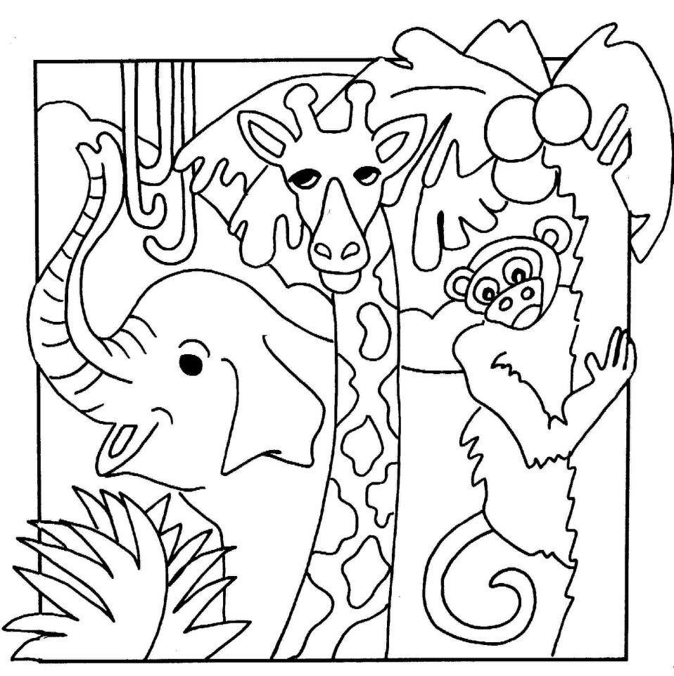 picture of safari animals pin on dierentuindieren lesideeën animals of safari picture
