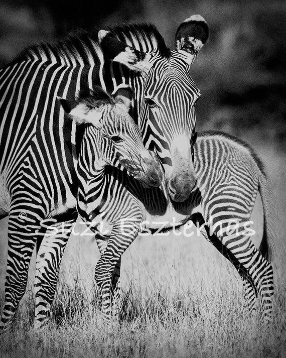 picture of safari animals safari animals animal coloring pages giraffe coloring safari picture of animals