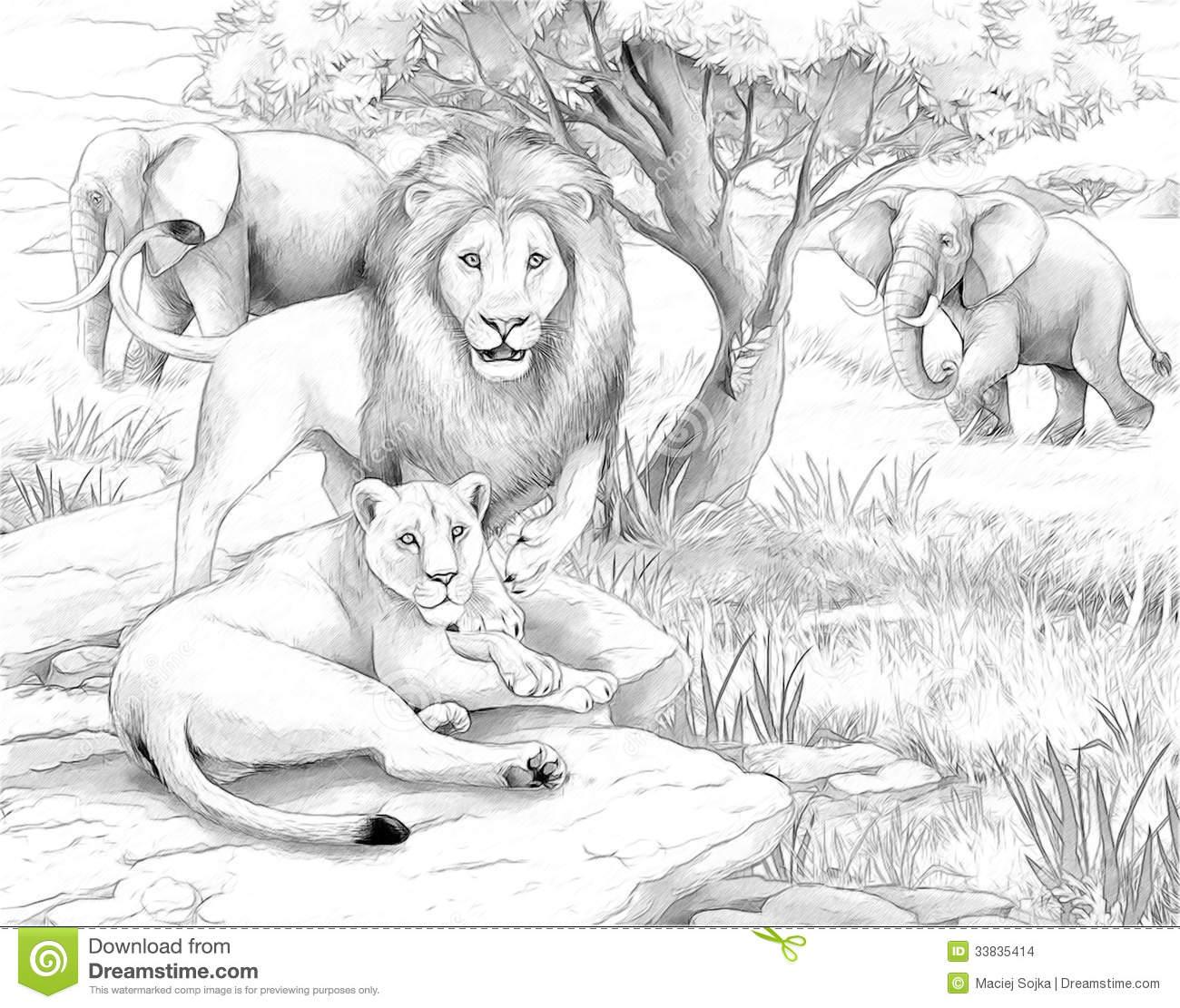 picture of safari animals safari animals coloring pages getcoloringpagescom safari of animals picture