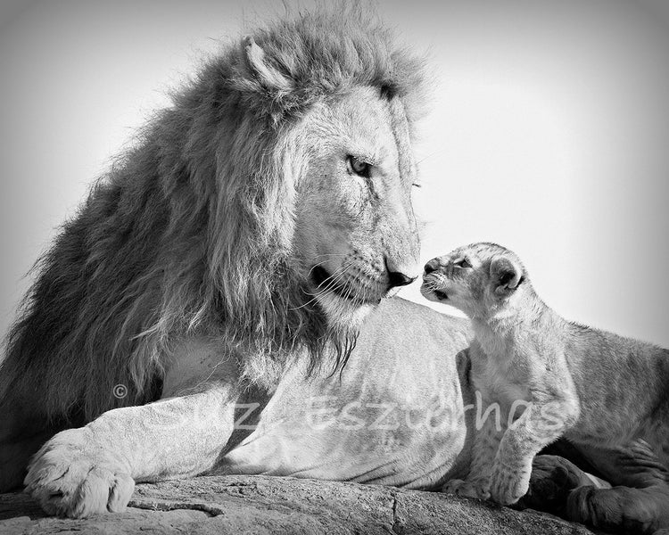 picture of safari animals safari baby animals photo set black and white baby animals picture safari of