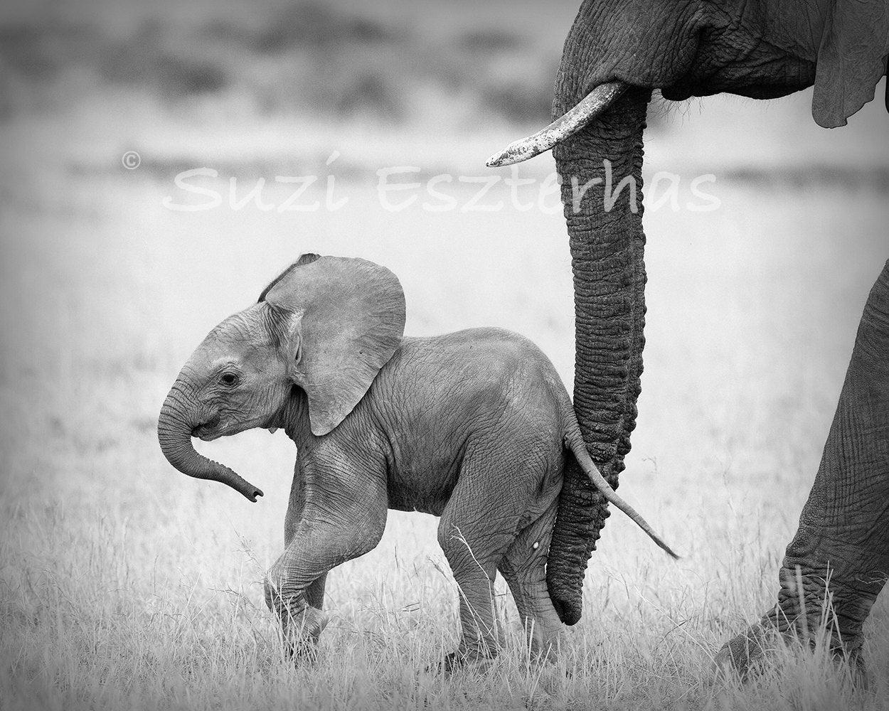 picture of safari animals safari baby animals set of 4 black white photos elephant safari animals of picture